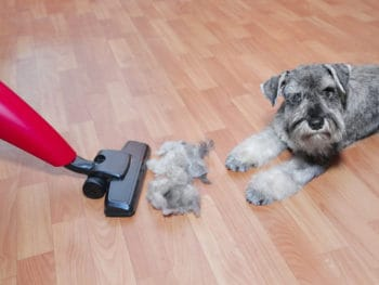 Best Vacuums for Hardwood Floors and Pet Hairs