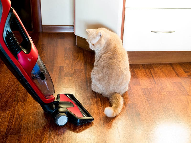 Vacuums for Hardwood Floors and Pet Hairs