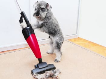 Best Carpet Cleaners for Pets