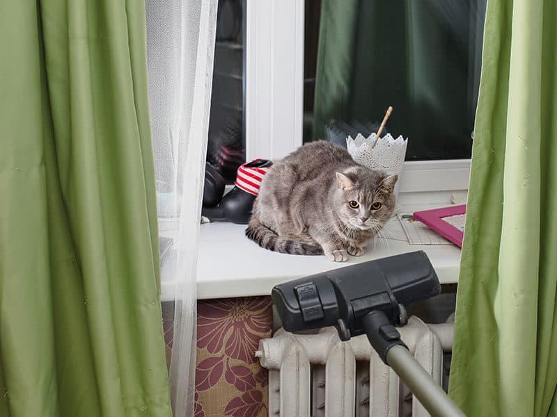 Vacuum for Cat Litter