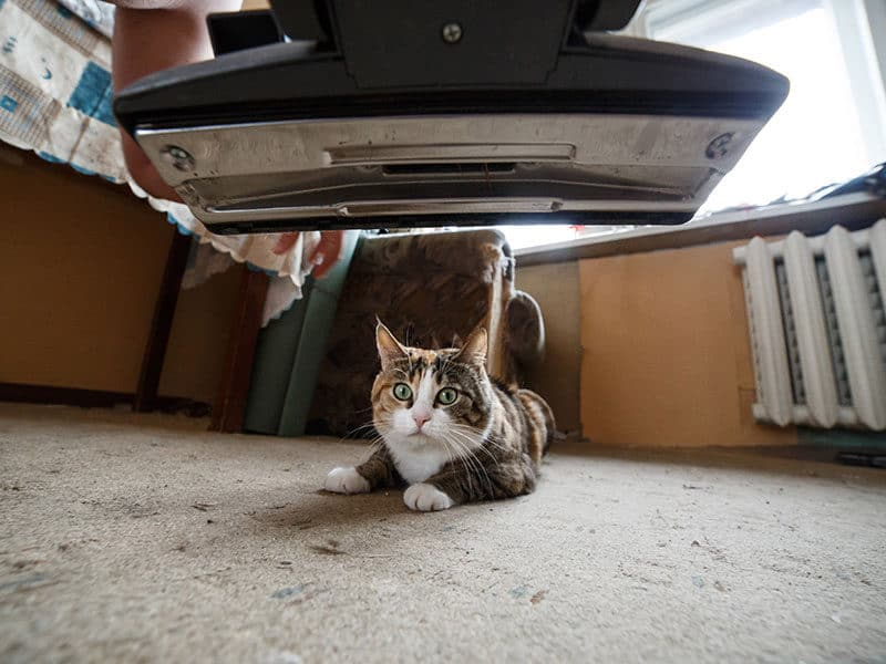 Vacuums for Cat Litter