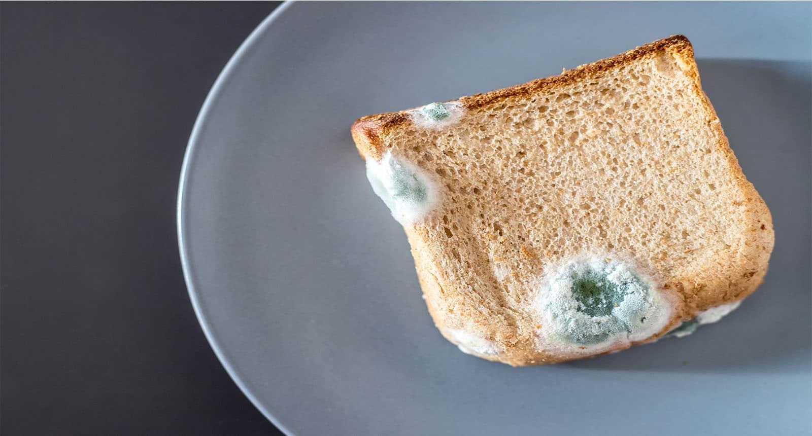 Rotten Toast Slices Green